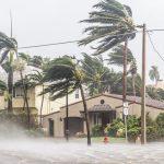 HurricaneTrees