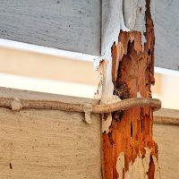 TermiteDamage